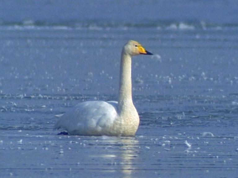 tiere im winter film