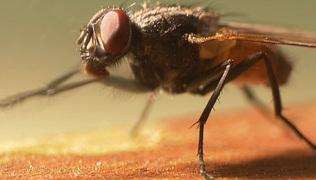 Haben Insekten Schmerzen