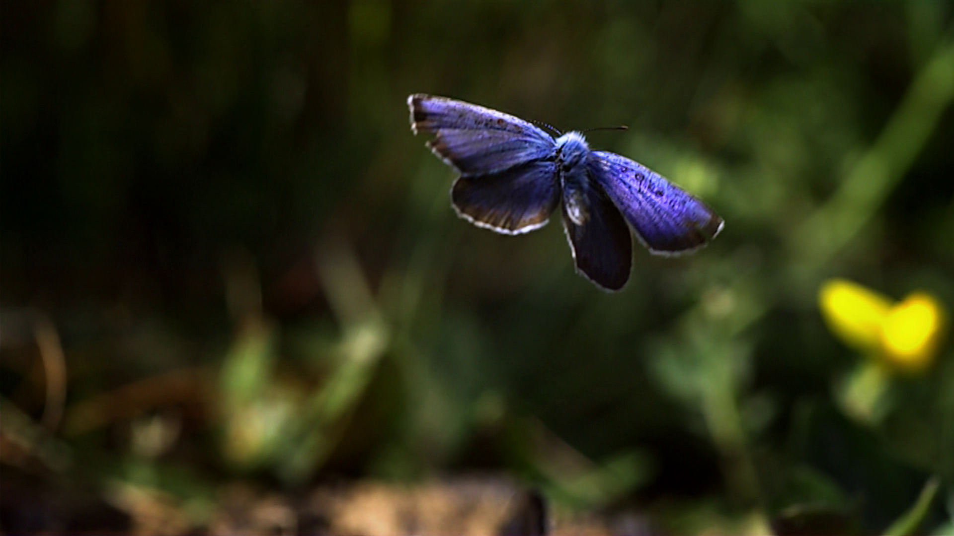 video wie fliegen schmetterlinge frage trifft antwort. Black Bedroom Furniture Sets. Home Design Ideas