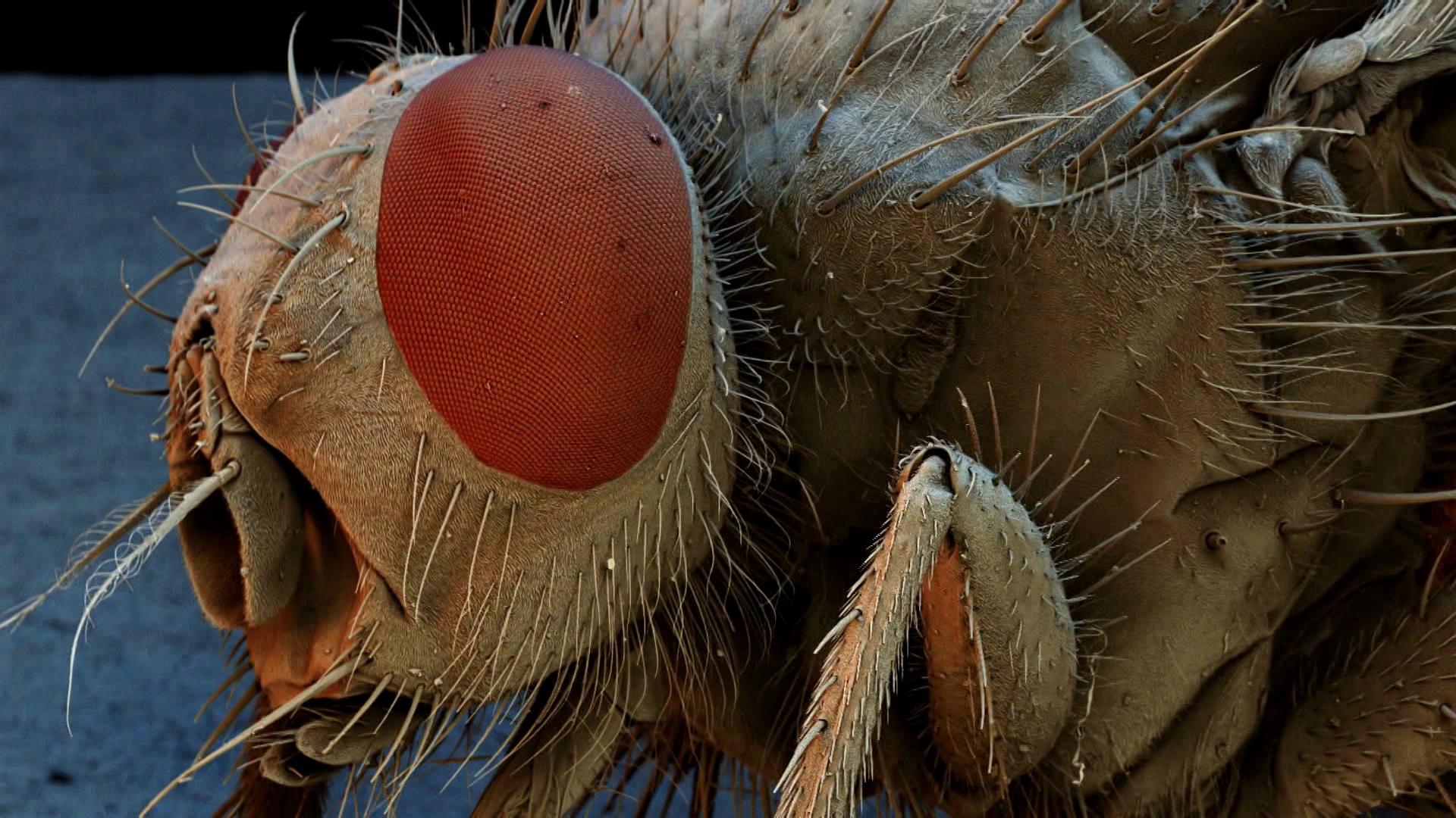 Video: Wie sieht eine Stubenfliege? - Frage trifft Antwort
