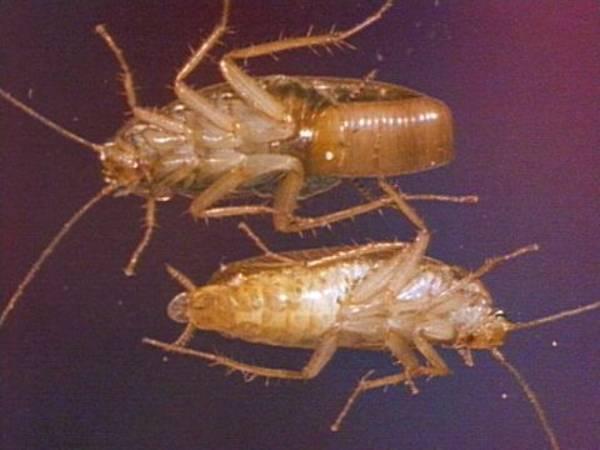 Entwicklung Und Lebensraum Kakerlaken Hintergrund Inhalt