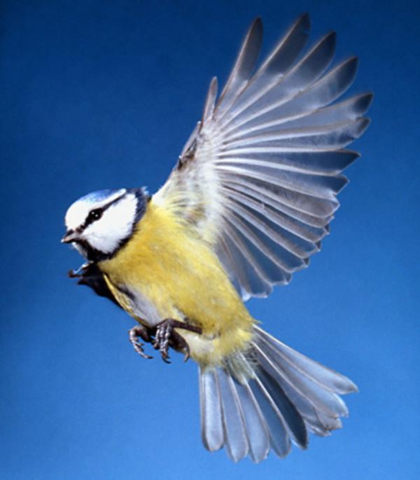 Welcher vogel sieht dem storch am ähnlichsten