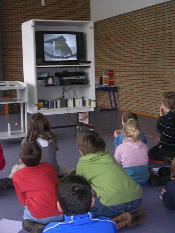 Bericht aus der Praxis: Vögel im Winter | Unterricht | Inhalt ...