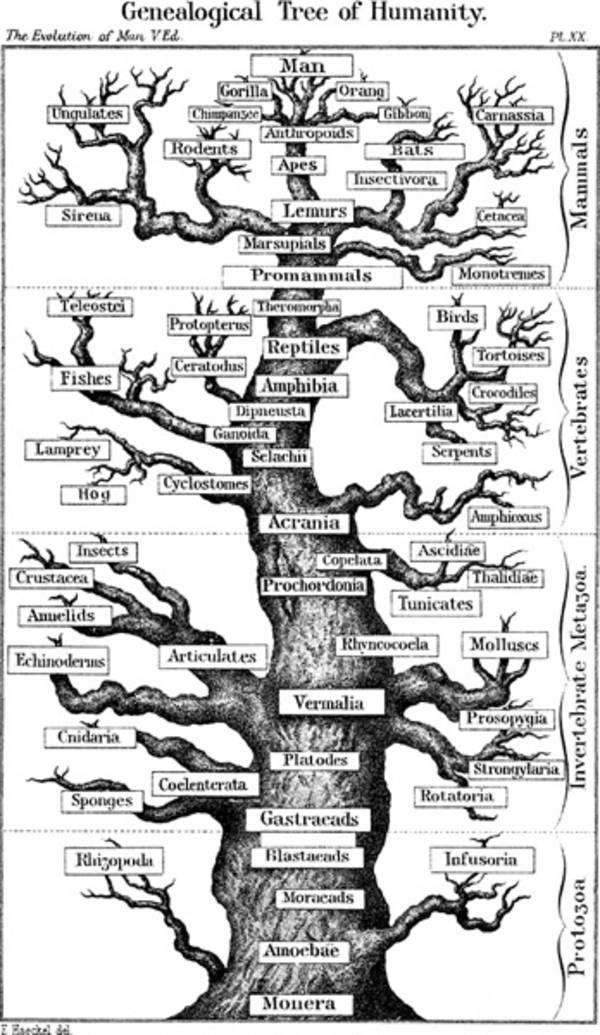 Kurs: Mythen über die Evolution | Hintergrund | Inhalt | Experiment ...